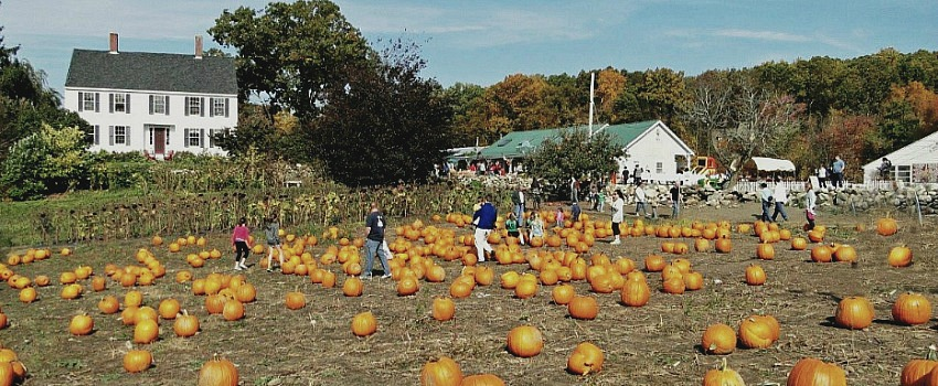 Pyo Pumpkin Patches